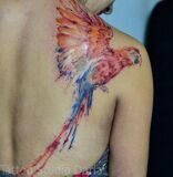 08-Parrot_Tattoo_Pictures